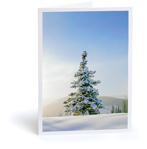 Snow Covered Tree Holiday Card